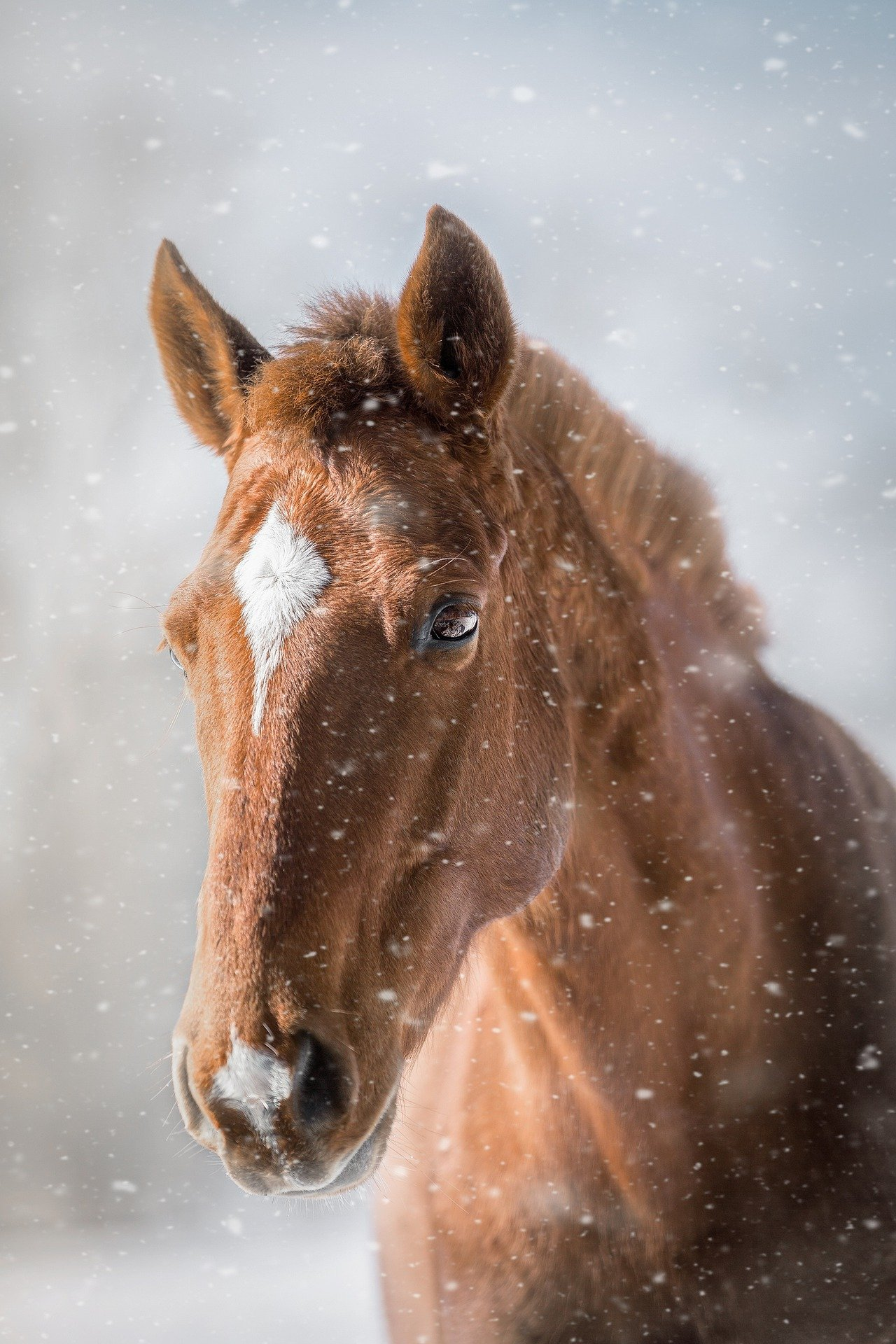 horse-4720178_1920