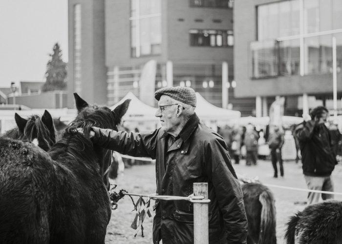 _MG_2440_Liggendpaardenmarkt2016